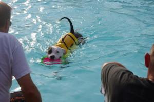 IMGP0858 Dog Swim 2010