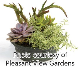 botanical-workshop-succulent-bowl-must-use-captions-photo-courtesy-of-pleasant-view-gardens-for-website
