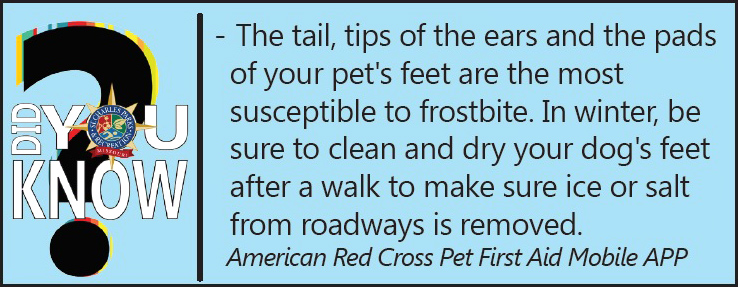 did-you-know-american-red-cross-pets